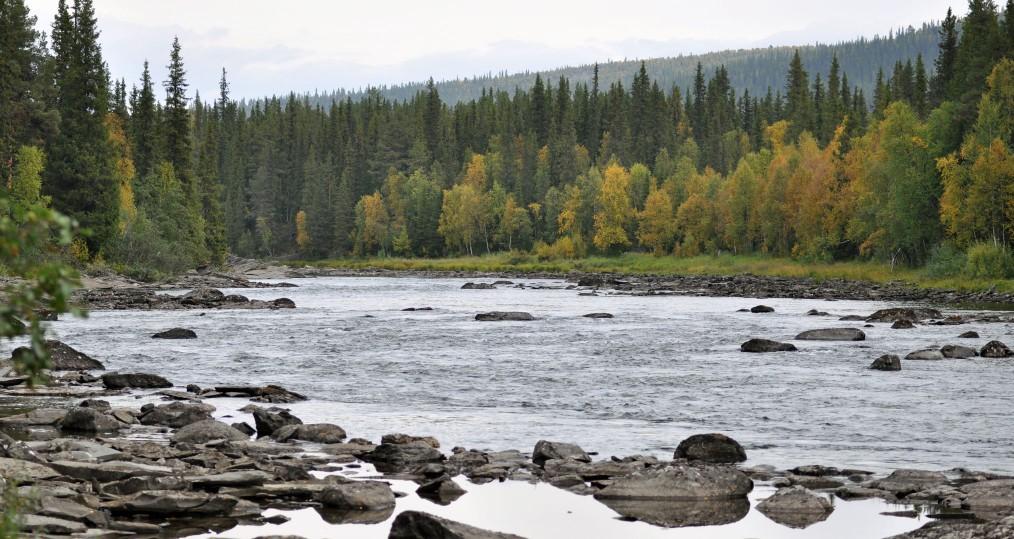 Övre delarna av Harabacken där hösten lyser