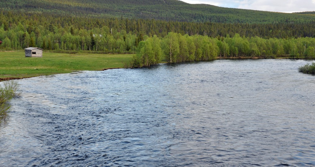 Bild från Tjulån i dag den 24 juni där vattennivån är hög