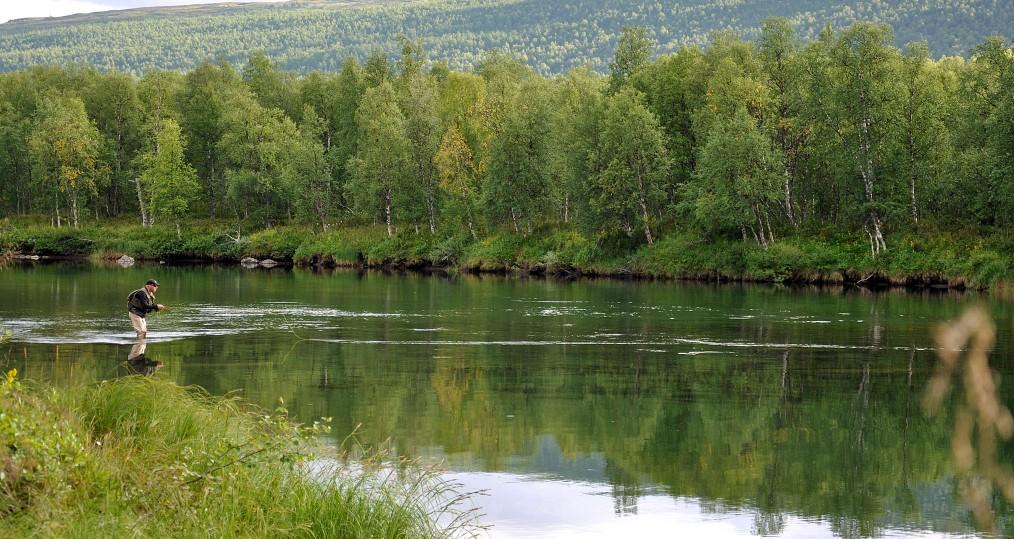 Vindelån uppströms där det kan bjudas på fint torrflugefiske