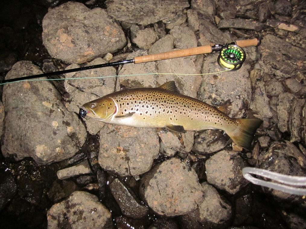 Martin Sundins fisk på 72 cm