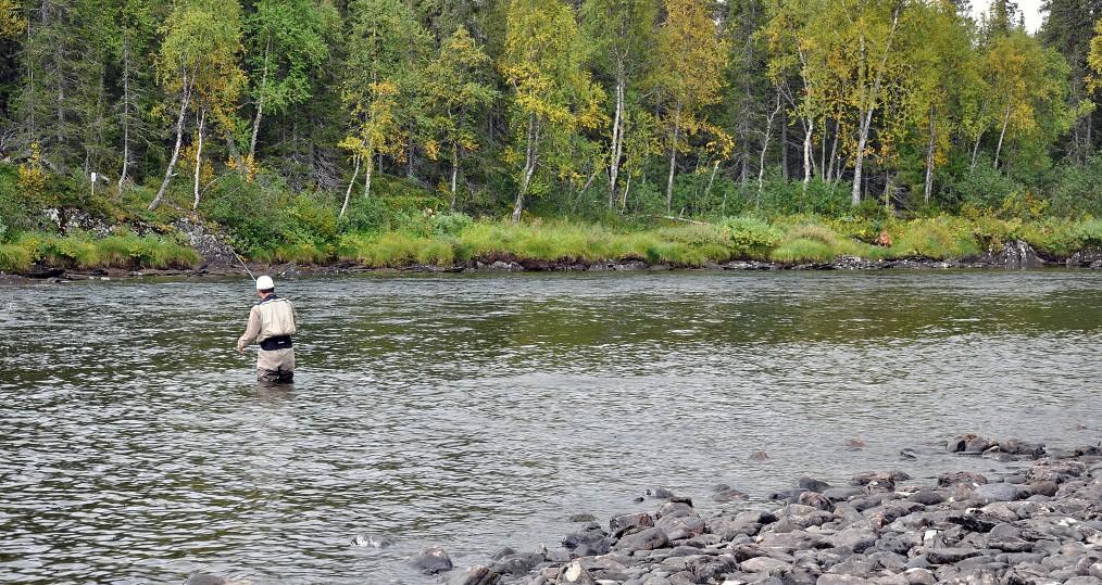 Höstfiske efter Ammarnäsöring vid Ovan Järnforsen