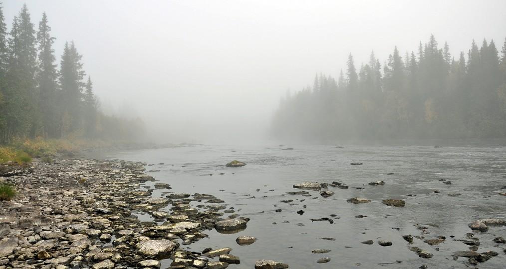 Härliga höstmornar när dimman ligger tät