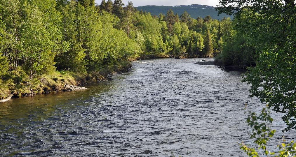 Tjulån från den 18 juni där vi har ett bra vattenstånd