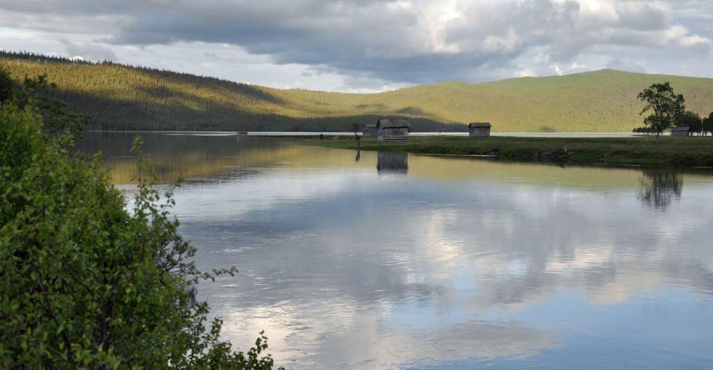 Nu faller vattennivån igen och på många ställen kan man nu komma åt fisken